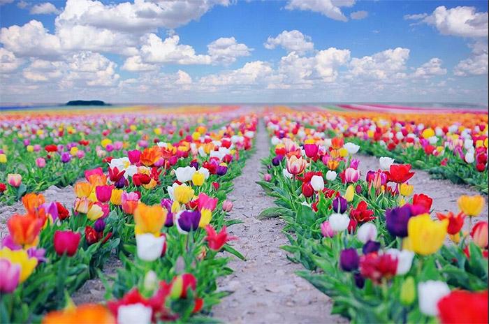 Mis Gibi Kokan Çiçek Çeşitleri
